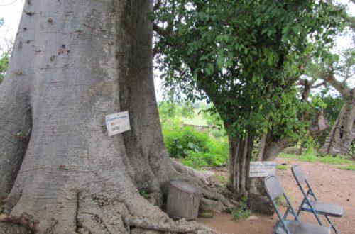 Article : Togo:  Des arbres séculaires de Kanté donnent naissance à un jardin botanique