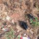 Article : Je suis la fourmilière de dagnouin